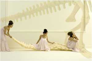 Life-Size Foam Dinosaur Skeleton for Caveman Fantasies