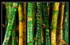 37 Innovations in Bamboo Plants