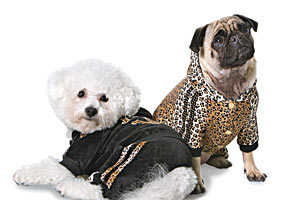 'Roberto Cavalli Pets' Is The Latest in Designer Doggy Style
