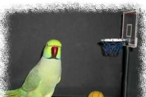 AJ the Parrot Is The Squaking New Darling of YouTube