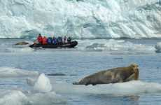 Green Movement Fuels Interest in Antarctica Cruises and Expeditions
