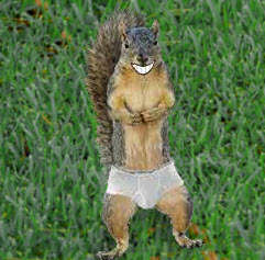 Squirrel Underpants