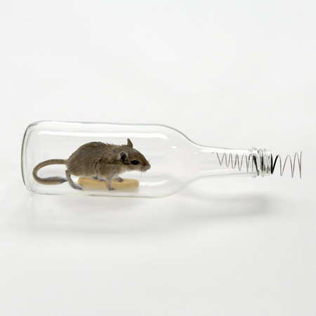 Glass Bottle Mouse Traps