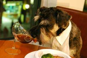 Chic Tablewear and Champagne Glasses for Cultured Pups