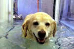 Acupuncture and Underwater Treadmills Aid Animal Wellness