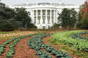 Obama's Organic Garden Will Grow Food and Teach Children