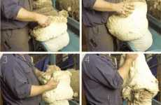 Bio-Shearing Sheep