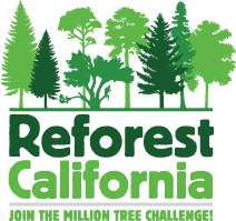 Reforesting California