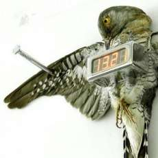 Cuckoo Clock by Michael Sans