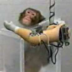 Robotic Arms For Monkeys
