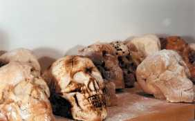 Bread Skulls Make For Bizarre But Anatomically-Correct Baking