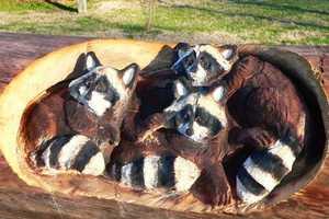 Randall Boni's Animal Carvings Are Incredibly Realistic