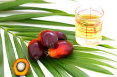 Lab-Grown Palm Oils - Eco-Friendly Tech Startup C16 Biosciences Launched a Palm Oil Alternative