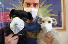 Swine Flu Face Masks Take Over Facebook Profile Pictures