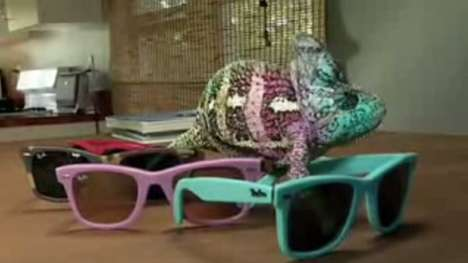 Sunglass Lizards