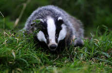 Fur-Free Beauty Pledges - Cult Beauty Recently Banned the Sale of Badger Hair on Its Site