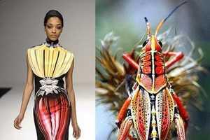 Mary Katrantzou Makes Insect-Like Apparel for Fall 2009