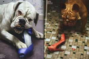 French Marie Claire Uses Designer Shoes as Chew Toys