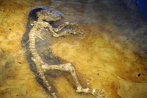 47 Million-Year-Old Ida Links Humans to Lemurs