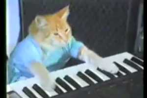 Keyboard Cat Punctuates Awkward Moments With Panache