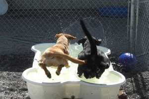 The 'One Dog One Bone' Swimming Pool for Canines
