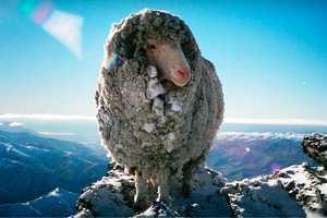 'Baacode' Tracks the Wool in New Zeland's 'Icebreaker' Clothing