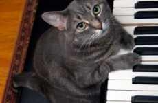 Feline Purr-Formers