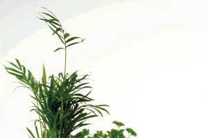 Anton Webb's Packit Potz Are Eco-Friendly, Encased Flower Pots