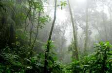 Sustainable Amazon Rainforest Projects - Natura Beauty Brand and Dow Collaborate For Project Yba