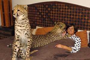 Riana Van Nieuwenhuizen's 11-Cheetah Breeding Center