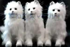 Sega's Revolutionary 'Dream Cat Venus' Response System