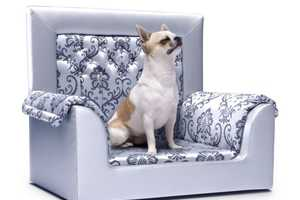 Wilber is an Ultra Luxe Swarovski-Studded Pet Sofa