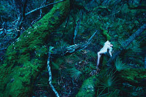 W Magazine Gets in Touch With Nature for August 2009
