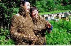 Insect Swarm Weddings - Daring Chinese Couple Weds While Covered in Bees