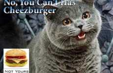 Meme Musicals - I Can Has Cheezburger and LOLcats Take on the Fringe Festival