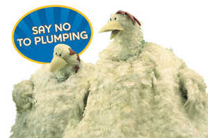 Foster Farms Ad Campaign to 'Say No to Plumping'