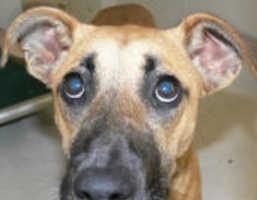 'Homeless Animal Day' Raises Awareness for Spay & Neuter