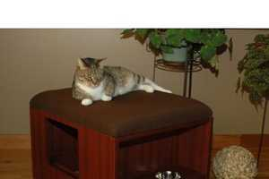 Cat Quarters Litter Box Enclosure Has Everything Kitty Needs
