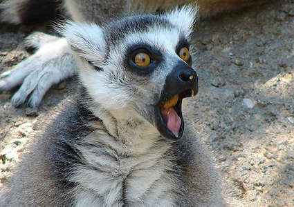 Emoting Critters - Collection of Animals Making OMG Faces Goes Viral