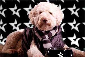 Elle Macpherson's Pup Signs 5-Figure Fashion Contract