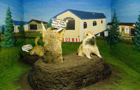 Gopher Taxidermy Museums - The Gopher Hole Celebrates Well-Dressed Rodents
