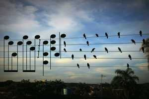 Jarbas Agnelli Uses Birds on a Wire as Musical Notes