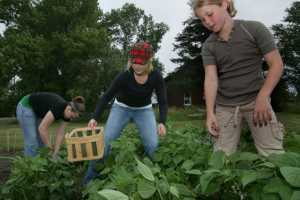Companies Turn to Gardening to Boost Workplace Morale