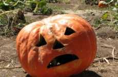 Weather-Affected Pumpkin Production - Jack-O-Lantern Plans May Be Squashed With Shortage