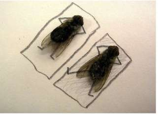 Morbidly-Cute Corpse Art - Dead Fly Pictures Emulate Human Behaviour