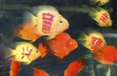 Customized Fish In High Demand In China
