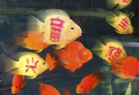 Tattooed Goldfish - Customized Fish In High Demand In China