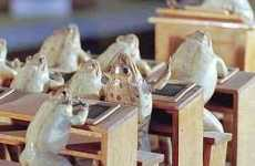 Switzerland's Museum of Stuffed Frogs Creates Tableaus