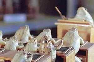 Switzerland's Museum of Stuffed Frogs Creates Tableaus