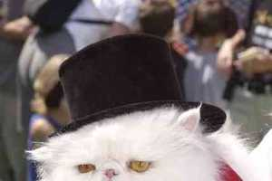 Cats in Hats Photos Shows Irritated Kitties